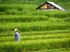 Wallpapers Trips : Asia Farmer
