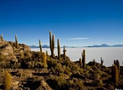 Fonds d'écran Voyages : Amérique du sud Salar d'Uyuni, Isla del Pescado