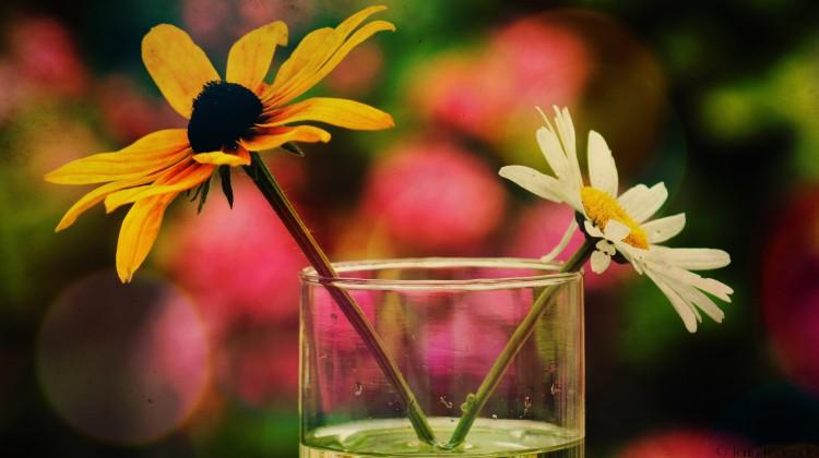 Fonds d'écran Nature Fleurs Bouquet Estival