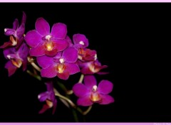 Wallpapers Nature Orchidee