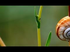Fonds d'écran Animaux L'Escargot et la Fourmi