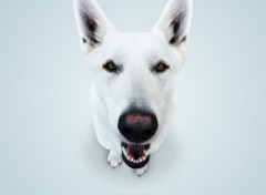 Wallpapers Animals ZoomDog