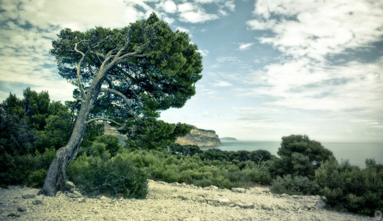 Wallpapers Nature Trees - Forests Calanque de Marseille