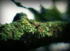Wallpapers Nature Lichen