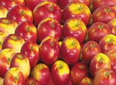Fonds d'écran Nature Pommes