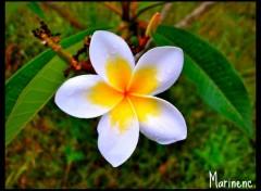 Fonds d'écran Nature Flower Power