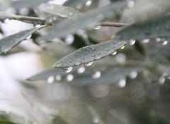 Fonds d'écran Nature pluie