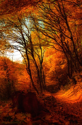 Wallpapers Digital Art Nature - Miscellaneous Impressions d'automne 7b.