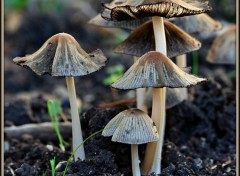 Wallpapers Nature Champignons....