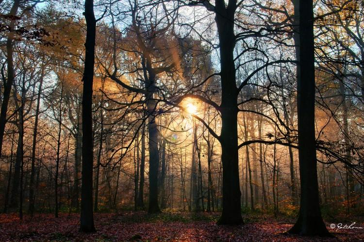 Fonds d'écran Nature Saisons - Automne Mist in Forest