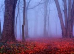 Fonds d'écran Nature Un épais brouillard 2.