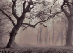 Fonds d'écran Nature Un épais brouillard 7.