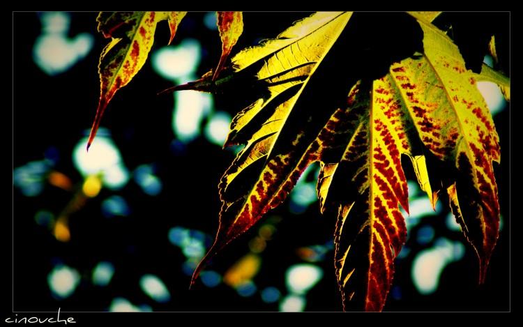 Fonds d'écran Nature Saisons - Automne dans la lumière...