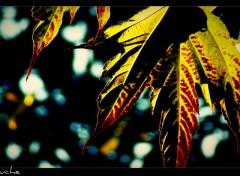 Fonds d'écran Nature dans la lumière...