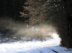 Wallpapers Nature Promenade un 1er Janvier Presles