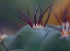 Wallpapers Nature Champ de cactus