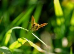 Fonds d'écran Animaux etrange papillon ...