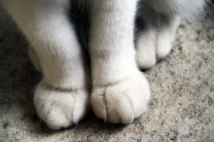 Fonds d'écran Animaux Chats - Chatons Patte de chat