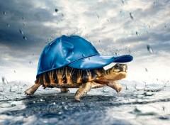 Fonds d'écran Art - Numérique tortue