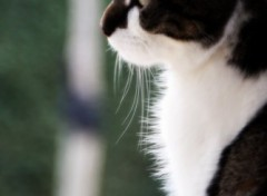 Wallpapers Animals Portrait d'un chat