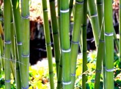Nature Bambou