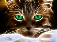 Animaux Light cat