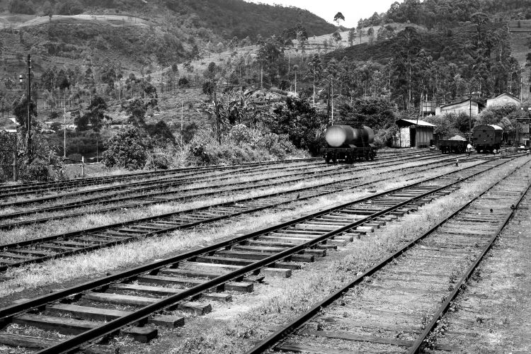 Fonds d'écran Transports divers Trains Railroad to the jungle