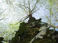 Nature Arborescence II
