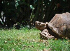 Animaux Tortue à vos marques !!!