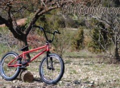Sports - Leisures Bmxgangster - eastern bike custom