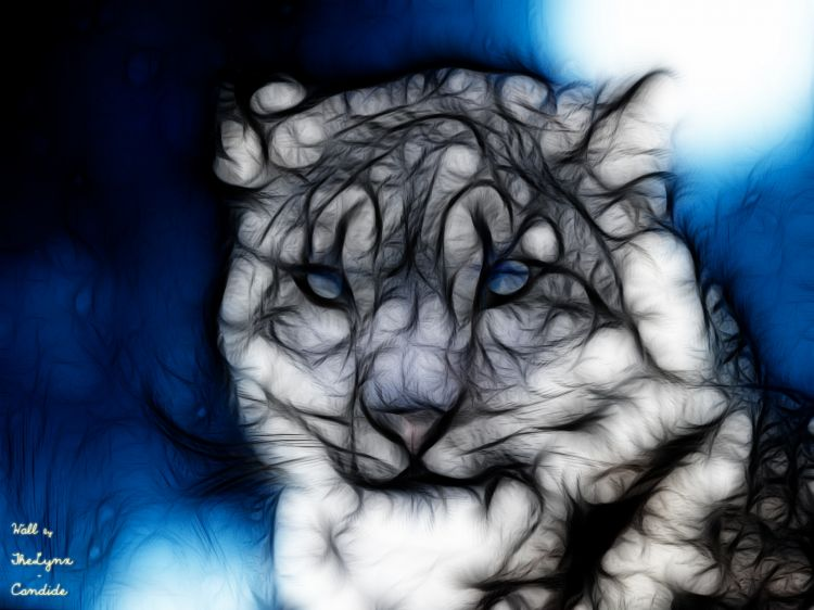 Wallpapers Digital Art Animals Panthère des Neiges - Fracts