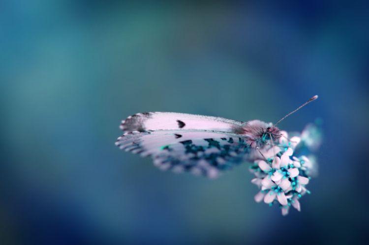 Fonds d 39 cran animaux fonds d 39 cran insectes divers for Magnifique fond ecran