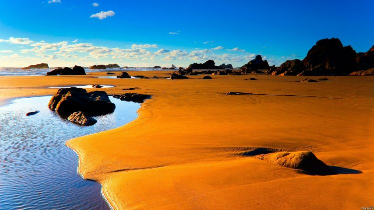 beach and coastal environment
