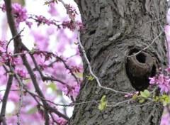 Nature Au temps des fleurs