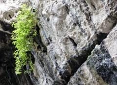 Nature Survie dans un milieu hostile
