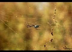 Animaux Araignée