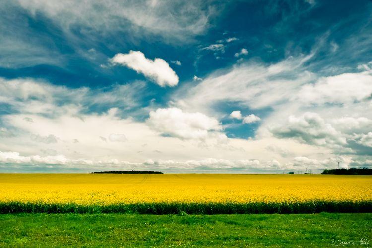 Fonds d'écran Nature Champs - Prairies Sun & Field