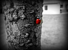 Animals en rouge et noir!