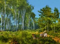 Art - Numérique Forêt peinture - PC