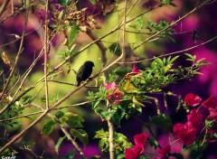 Animals litle bird