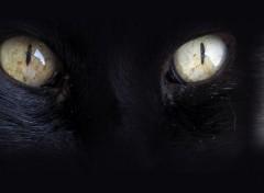 Animaux Profond regard de chat noir