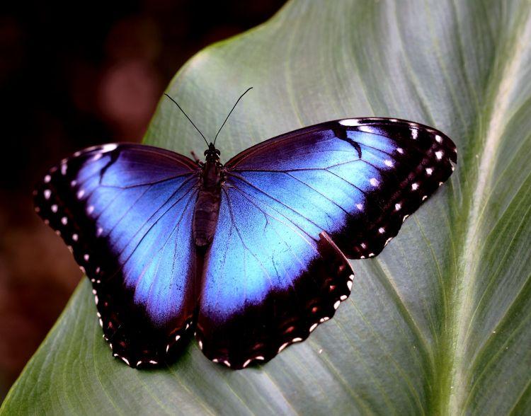 Fonds d'écran Animaux Insectes - Papillons Wallpaper N°302722
