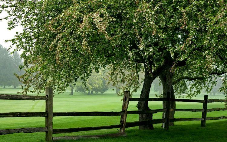 fonds d 39 cran nature fonds d 39 cran arbres for ts cloture autour de la prairie par yushy. Black Bedroom Furniture Sets. Home Design Ideas