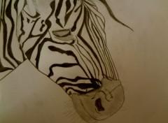 Art - Pencil Zèbre