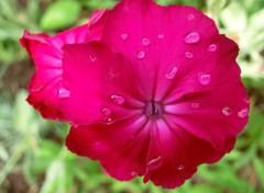 Nature quelques gouttes de pluie