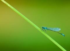 Animals miss dragonfly