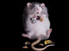 Animals A consommer avec modération.