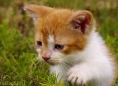Animaux ludique chaton 3.