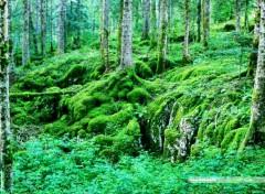 Nature Le coeur des forêts