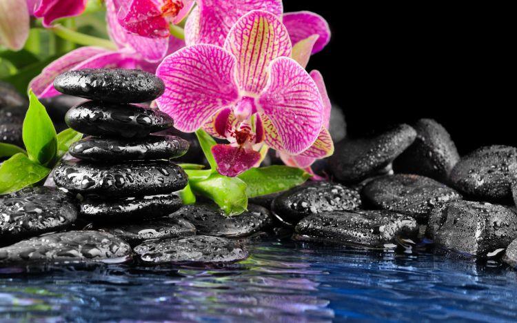 Fonds d 39 cran nature fonds d 39 cran fleurs zen par yushy - Image zen nature ...